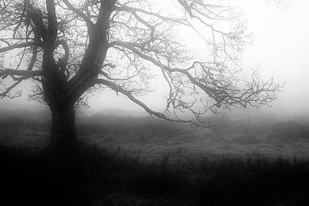 boira, tardor, mística, estat d'ànim de temps, estat d'ànim, natura, ambient