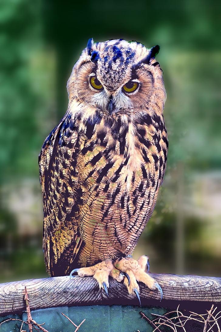 sowa, bird, pharaoh eagle owl, bird of prey, animals
