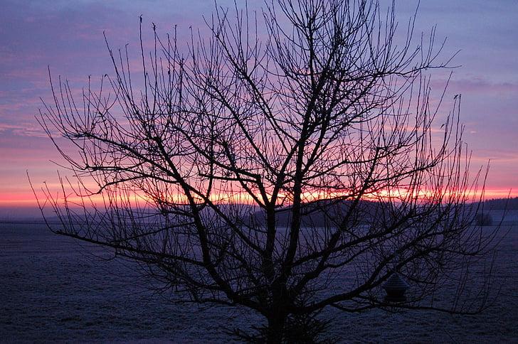 Alba, l'hivern, arbre, morgenstimmung, Alba d'hivern, paisatge, fred hivern