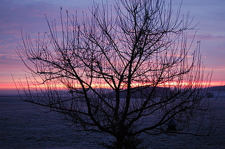 sunrise, winter, tree, morgenstimmung, winter sunrise, landscape, winter cold