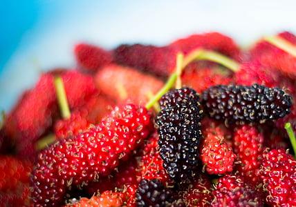Mulberry, puu, maasikas, punane, värskuse, toidu ja joogiga, Suurendus: