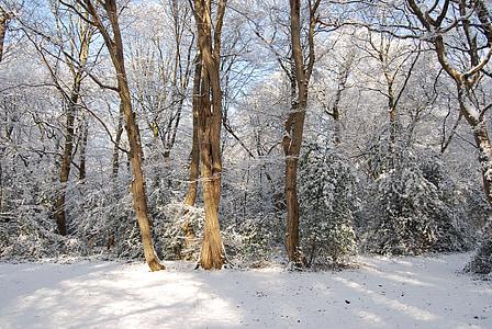 sneg, pozimi, gozd, drevo, sneženje, hladno, zamrznjeni