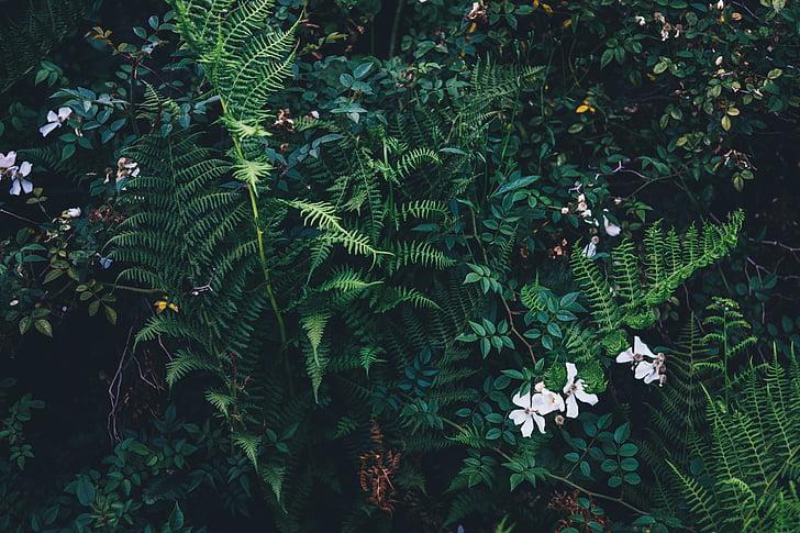 natura, creixement, plantes, vida, verd, natural, primavera