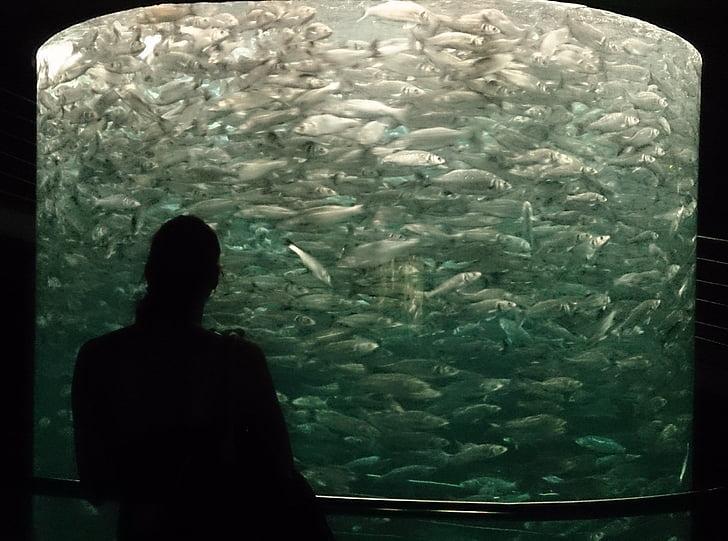 Aquari, Tenerife, peix, eixam de peixos