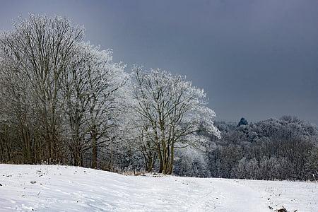 Frost, Kuura, talvi, kylmä, Poista, Luonto, Sun