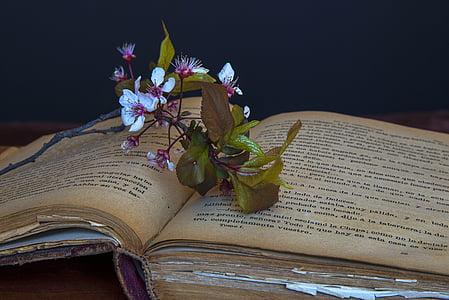 llibres antics, llibre, llibres, vell, lectura, Jo sóc un estudiant, cultura