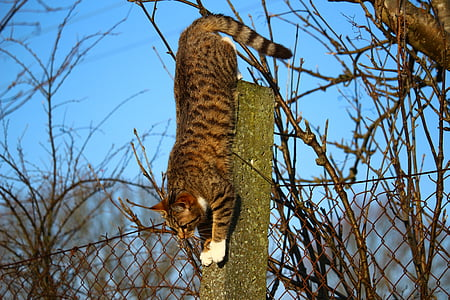 cat, kitten, mackerel, mieze, post, climb, tree