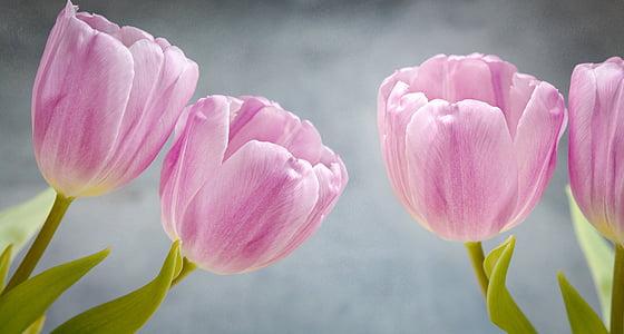 лалета, розово, розови цветя, цветя, брой парчета, листенца, търг