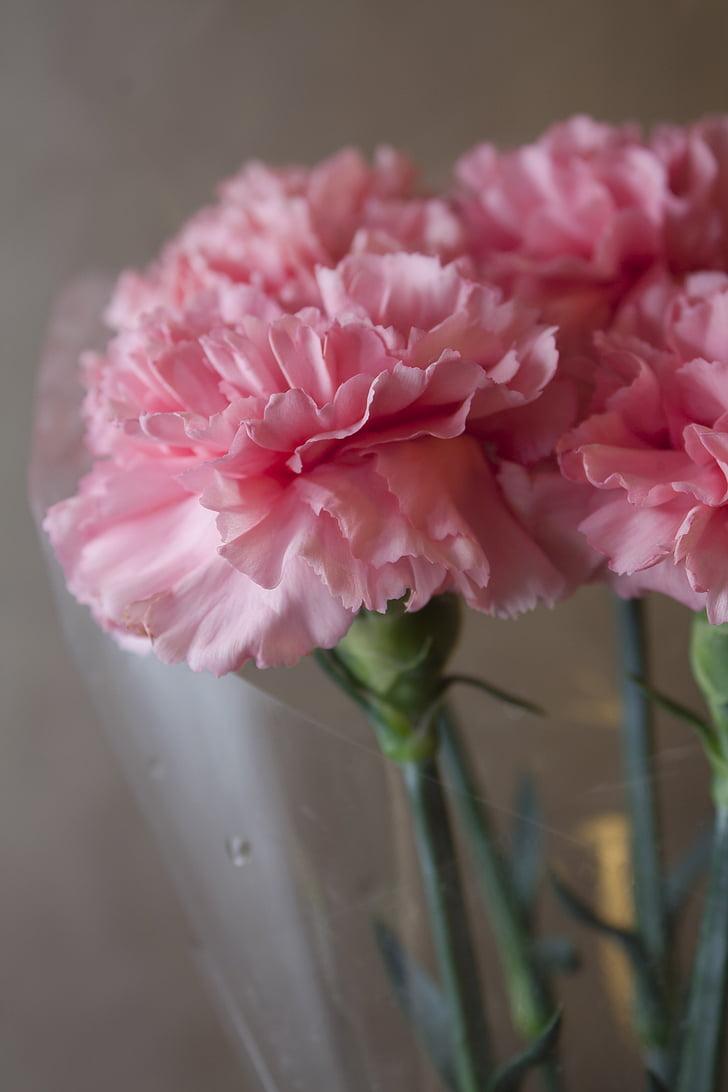 clove, pink, flowers, beautiful flower