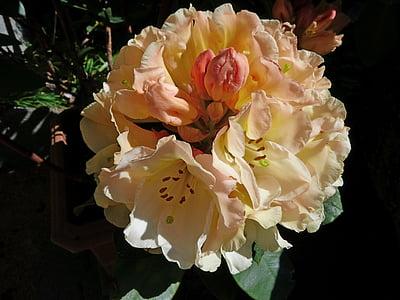 neret, flors, natura, jardí, ornamentació, primavera, pètals