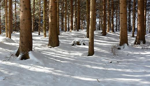 Zimní, sníh, Les, stromy, Zimní, Příroda, chlad
