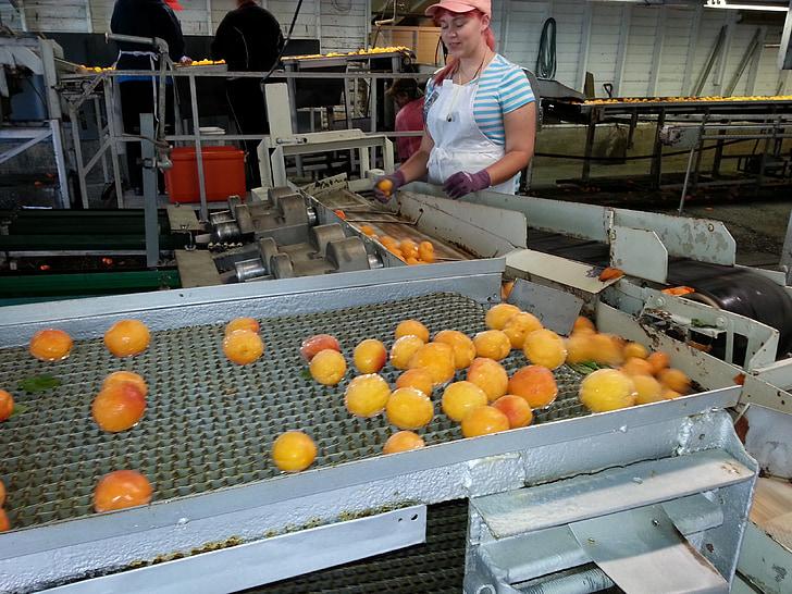 produir, aliments, conserves, processament, procés, Conserves de fruita, conserves