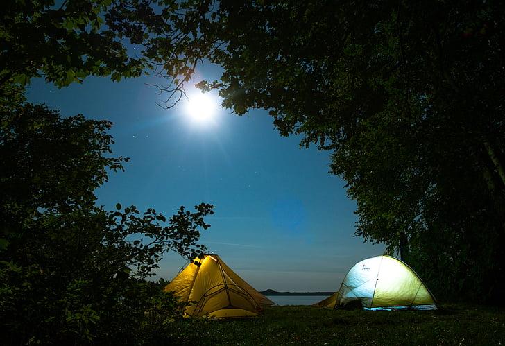 medžiai, augalų, siluetas, Gamta, lauko, naktį, mėnulis