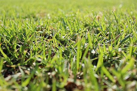 γκαζόν, χλόη, γκολφ, Κήπος, τοπίο, πράσινο, Λιβάδι