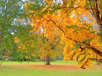Sonbahar, Park, ağaç, sonbahar yaprakları, ortaya, sonbahar orman, yaprak