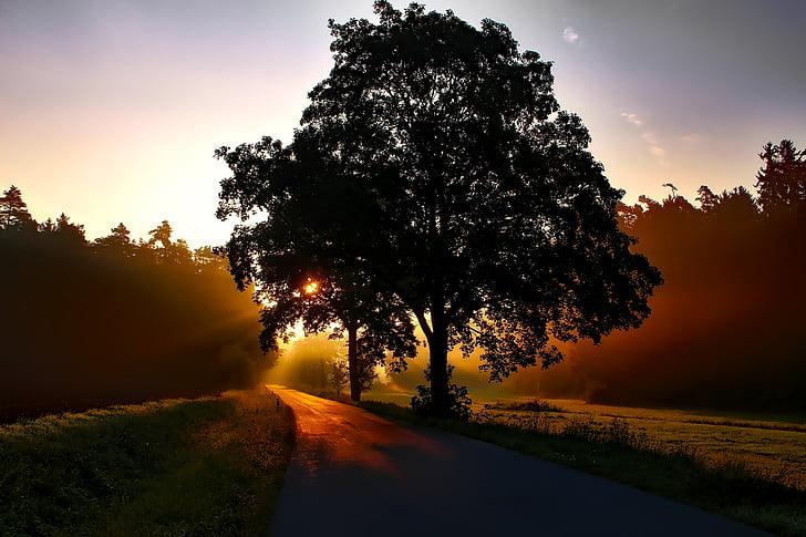 Saksamaa, Sunrise, Dawn, Daybreak, maastik, metsa, puud