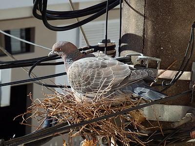bird, pigeon, pigeon nest, birdie, dove