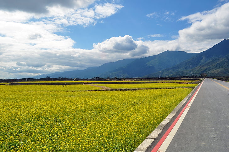 sea of flowers, countryside, the scenery, mountain, beautiful views