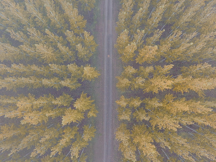nature, landscape, woods, forest, trees, aerial, road
