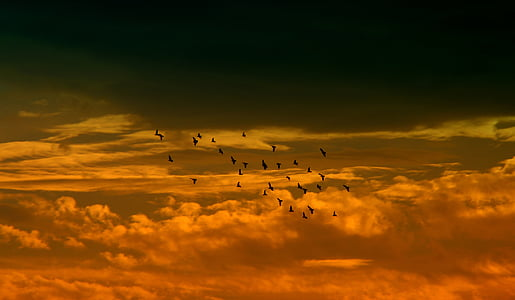 sunset, sky, cloud, birds, red, flying, nature