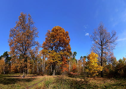 autumn, forest glade, glade, trees, tree, nature, leaf