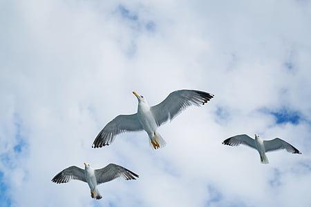 Linnut, lokki, lokit, Kaunis, lintu, Luonto, pilvet