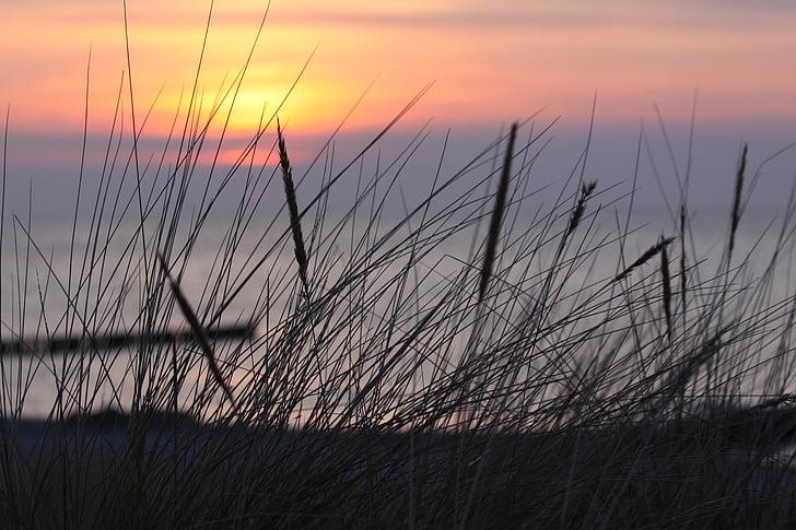 dawn, beach, dune