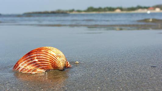 Beach, Sea, Seashell, Sand, rannikko, hiekkaranta, kesällä