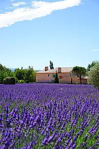 Λεβάντα, Κτήμα, το κατάλυμα, Λεβάντα πεδίο, άνθη λεβάντας, μπλε, λουλούδια