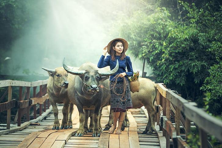 landbruk, dyr, Asia, vakker, gutter, Buffalo, Kambodsja