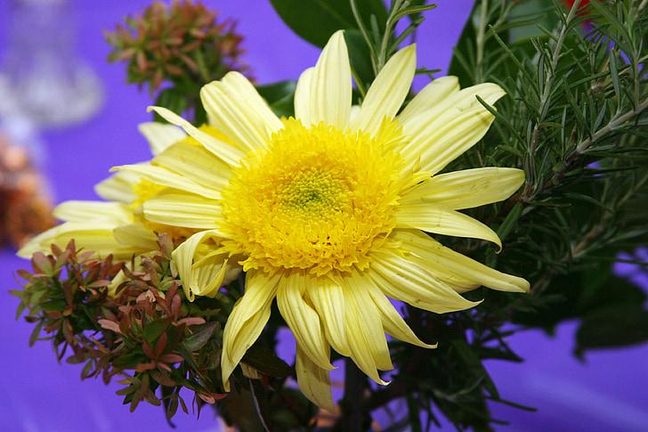 puķe, mamma, dzeltena, kritums, rudens, krāsains, sezonas