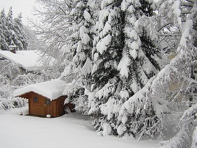 winter, snow, cold, garden, white, hell, winter forest