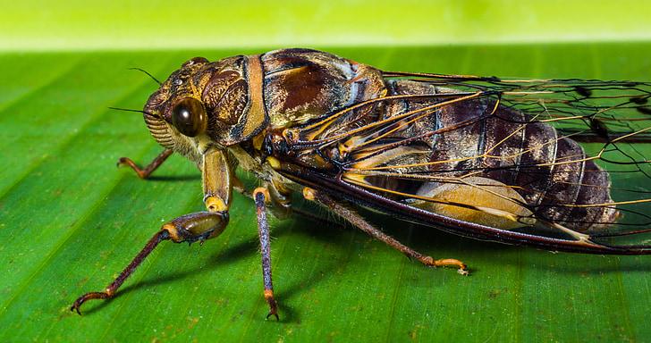 insect, nieuw insect, kanjer, sluiten