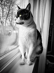 cat, window, pet, animal, white, cute, kitten