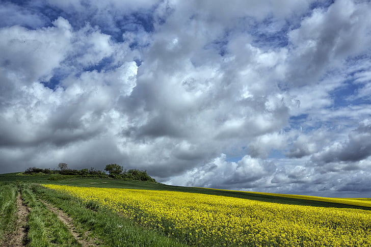 field, agricultural, clouds, france, cereals, nature, summer