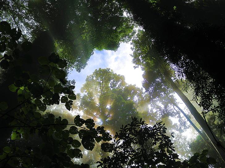 bosc, arbre, Corona, boira, morgenstimmung, Sunbeam
