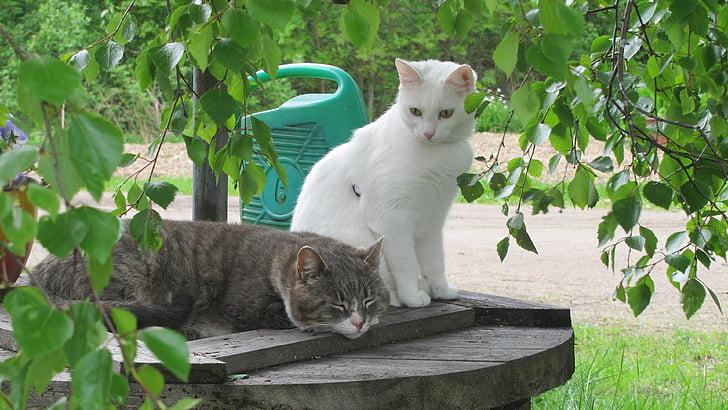 cat, cats, animals, hairy, gaze, cat lying, lying