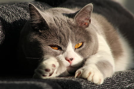 cat, mieze