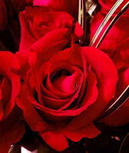 vermell, Rosa, roses vermelles, flor, Sant Valentí, brot