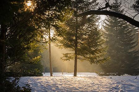 forest, glade, sun, fog, haze, nature, sunbeam