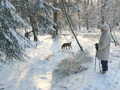 winter, winter forest, snow, winter dream, snowy, walk, hike