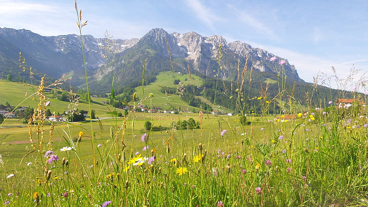 mountain meadow, spring, meadow, flowers, alpine, mountains, summer meadow