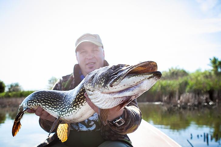 Veľká šťuka, ryby, Rybolov, rybár, chytiť, šťuka