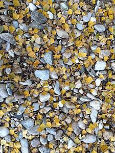 pedres, colors, estructura, còdols, molts, fulles, tardor