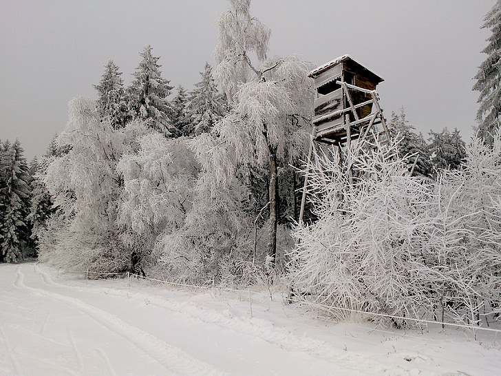 헌터는, 눈, 숲, 눈 숲, 하얀, 자연, 눈 덮인