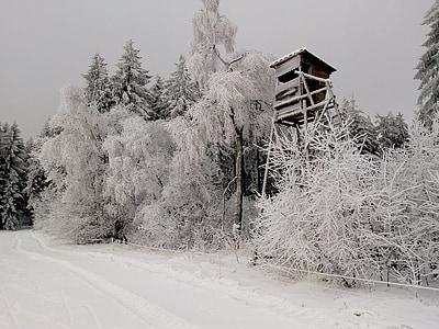Hunter foi, neve, floresta, floresta de neve, Branco, natureza, Nevado