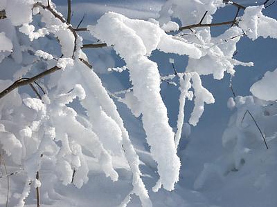 zasněžené, sníh, větev, jemné, chlad, estetické, Zimní