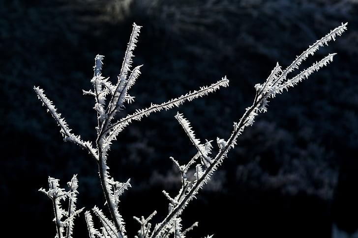wintry, frost, hoarfrost, iced, frozen