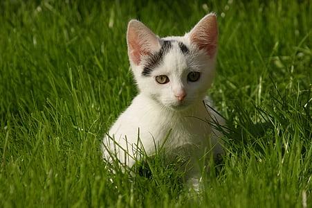 small cat, cat, domestic cat, pet, kitten, mieze, cute