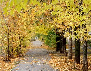 tardor, fulles, arbre, fulles de tardor, fulles grogues, natura, tardor daurat